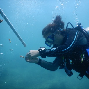 Measuring coral for growth